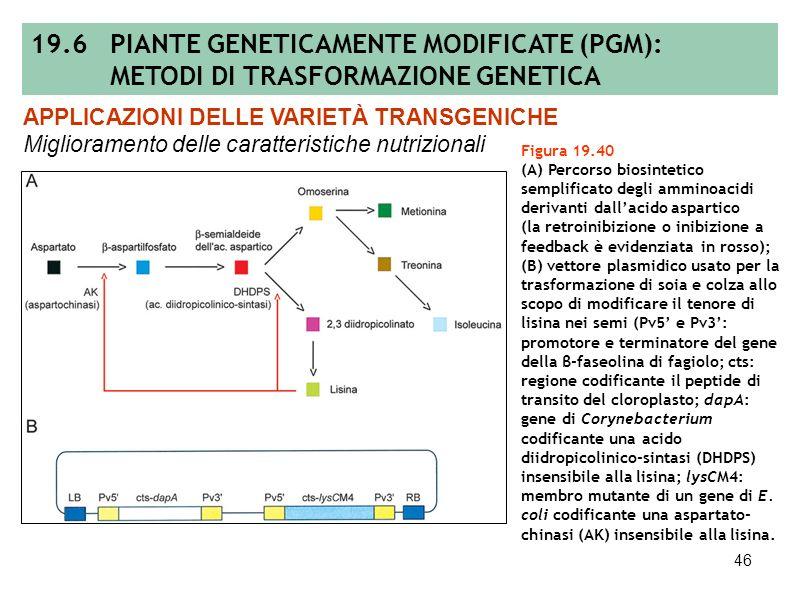 45 Tabella 19.6 Lista delle principali PGM di II generazione oggetto di sperimentazione in pieno campo. DIFFUSIONE E CLASSIFICAZIONE DELLE PIANTE TRAN