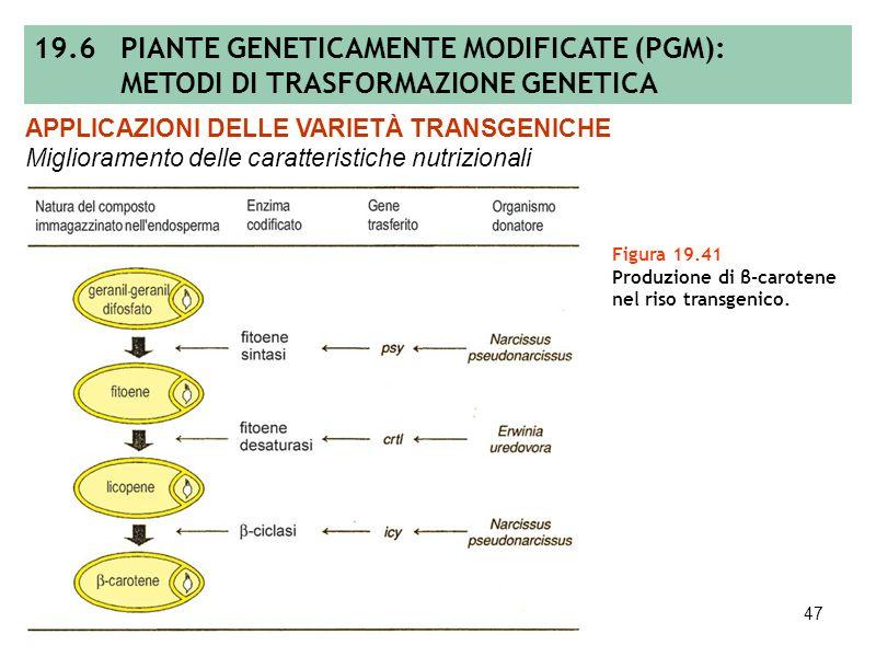 46 Figura 19.40 (A) Percorso biosintetico semplificato degli amminoacidi derivanti dallacido aspartico (la retroinibizione o inibizione a feedback è e