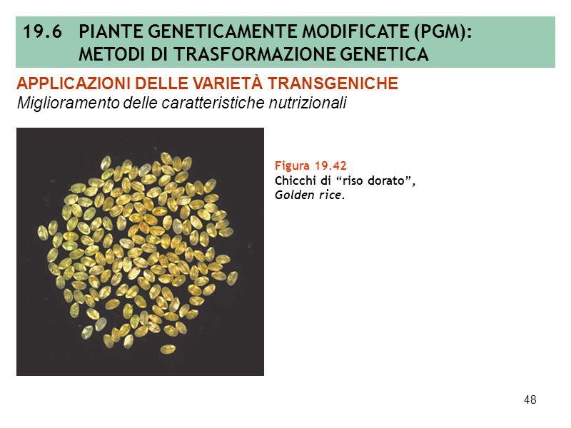 47 Figura 19.41 Produzione di β-carotene nel riso transgenico. APPLICAZIONI DELLE VARIETÀ TRANSGENICHE Miglioramento delle caratteristiche nutrizional