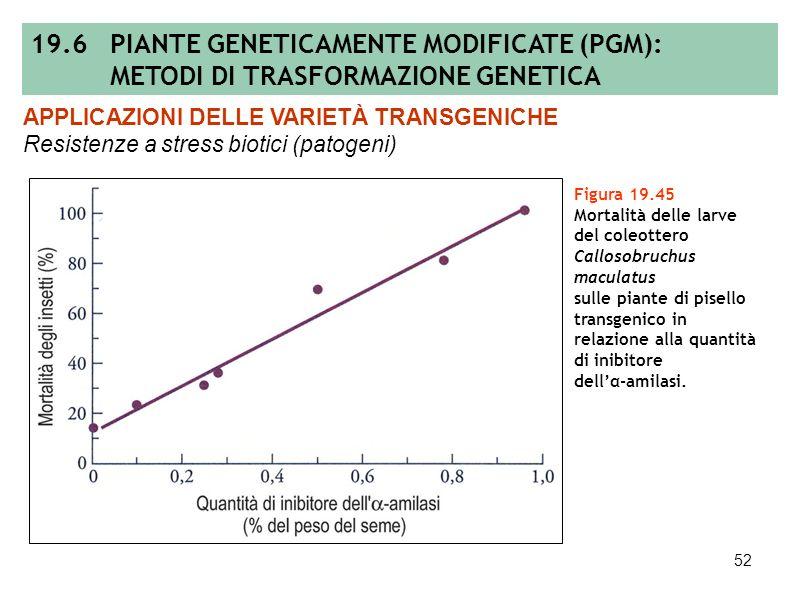 51 Figura 19.44 Batteri di Bacillus thuringiensis (A) ed esempi di piante transgeniche resistenti agli insetti: danni da piralide in spighe e culmi di