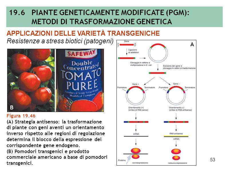 52 Figura 19.45 Mortalità delle larve del coleottero Callosobruchus maculatus sulle piante di pisello transgenico in relazione alla quantità di inibit