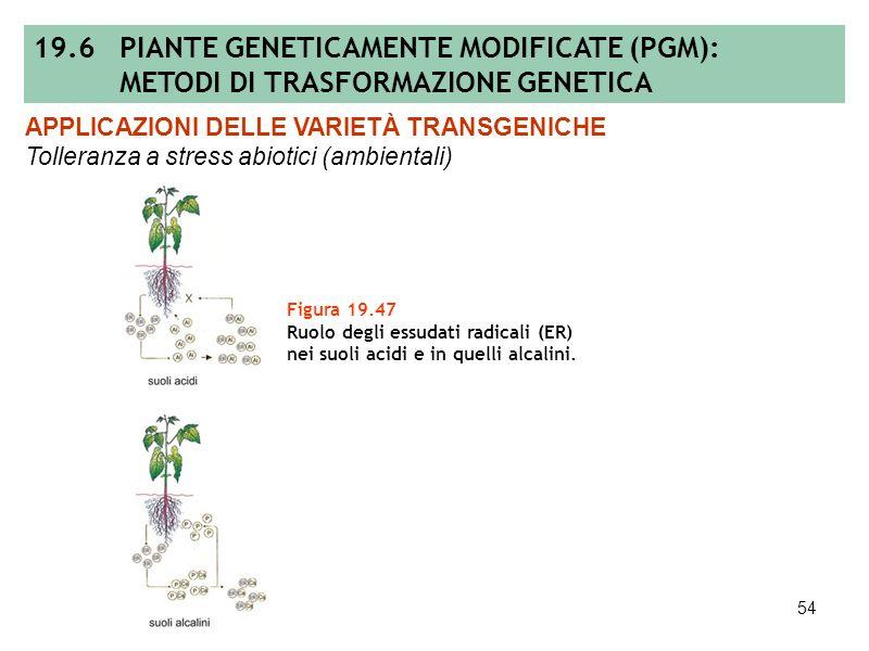 53 Figura 19.46 (A) Strategia antisenso: la trasformazione di piante con geni aventi un orientamento inverso rispetto alle regioni di regolazione dete