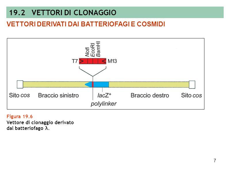 6 Figura 19.5 Mappa di un plasmide usato per trascrivere RNA e per clonare DNA dei prodotti di PCR. PLASMIDI 19.2 VETTORI DI CLONAGGIO