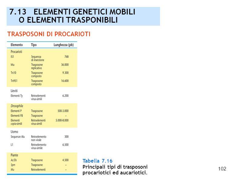 102 7.13 ELEMENTI GENETICI MOBILI O ELEMENTI TRASPONIBILI TRASPOSONI DI PROCARIOTI Tabella 7.16 Principali tipi di trasposoni procariotici ed aucariot
