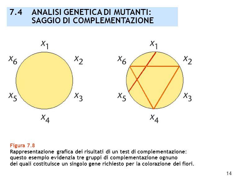 14 Figura 7.8 Rappresentazione grafica dei risultati di un test di complementazione: questo esempio evidenzia tre gruppi di complementazione ognuno de