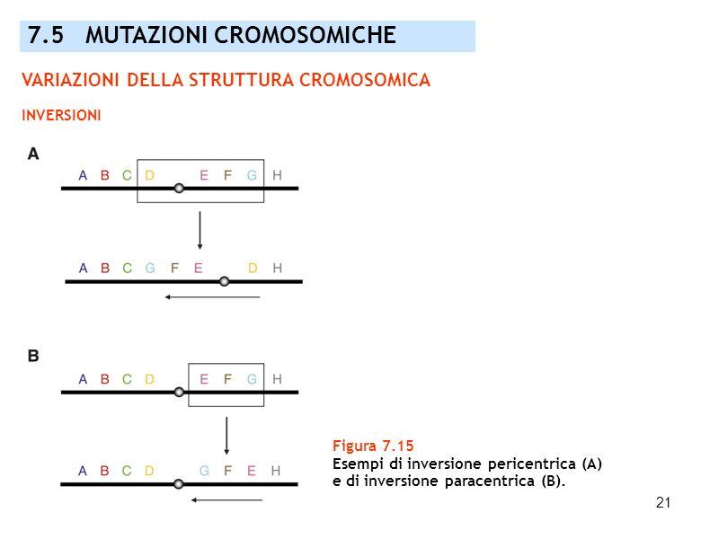 21 Figura 7.15 Esempi di inversione pericentrica (A) e di inversione paracentrica (B). 7.5 MUTAZIONI CROMOSOMICHE VARIAZIONI DELLA STRUTTURA CROMOSOMI