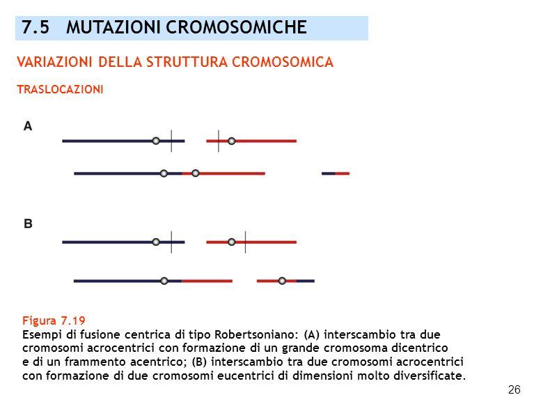 26 Figura 7.19 Esempi di fusione centrica di tipo Robertsoniano: (A) interscambio tra due cromosomi acrocentrici con formazione di un grande cromosoma