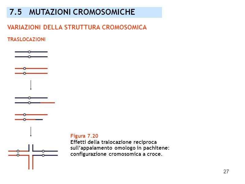 27 Figura 7.20 Effetti della tralocazione reciproca sullappaiamento omologo in pachitene: configurazione cromosomica a croce. 7.5 MUTAZIONI CROMOSOMIC