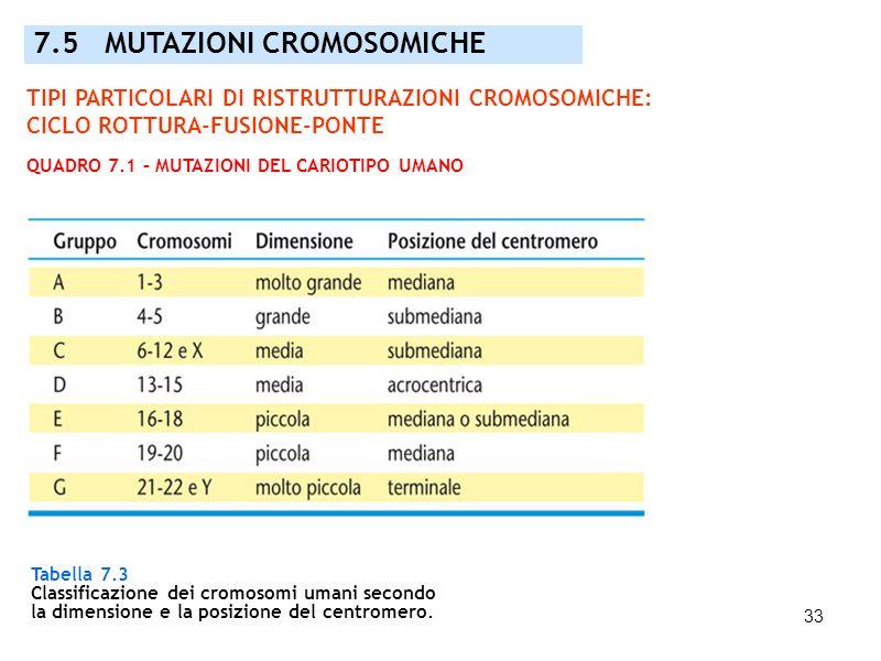 33 7.5 MUTAZIONI CROMOSOMICHE Tabella 7.3 Classificazione dei cromosomi umani secondo la dimensione e la posizione del centromero. TIPI PARTICOLARI DI