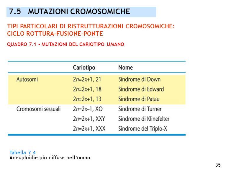35 7.5 MUTAZIONI CROMOSOMICHE Tabella 7.4 Aneuploidie più diffuse nelluomo. TIPI PARTICOLARI DI RISTRUTTURAZIONI CROMOSOMICHE: CICLO ROTTURA-FUSIONE-P