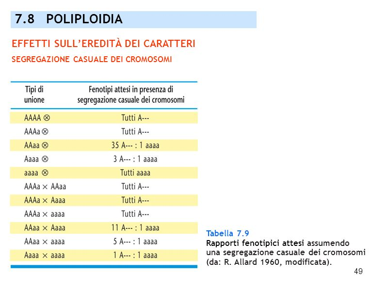 49 Tabella 7.9 Rapporti fenotipici attesi assumendo una segregazione casuale dei cromosomi (da: R. Allard 1960, modificata). 7.8 POLIPLOIDIA EFFETTI S