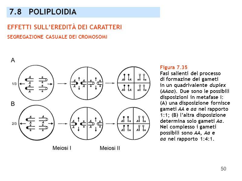 50 Figura 7.35 Fasi salienti del processo di formazine dei gameti in un quadrivalente duplex (AAaa). Due sono le possibili disposizioni in metafase I: