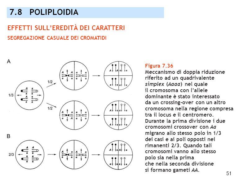 51 Figura 7.36 Meccanismo di doppia riduzione riferito ad un quadrivalente simplex (Aaaa) nel quale il cromosoma con lallele dominante è stato interes