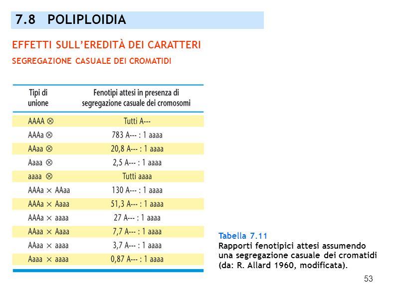 53 Tabella 7.11 Rapporti fenotipici attesi assumendo una segregazione casuale dei cromatidi (da: R. Allard 1960, modificata). 7.8 POLIPLOIDIA EFFETTI