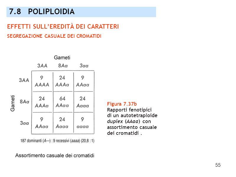 55 Figura 7.37b Rapporti fenotipici di un autotetraploide duplex (AAaa) con assortimento casuale dei cromatidi. 7.8 POLIPLOIDIA EFFETTI SULLEREDITÀ DE