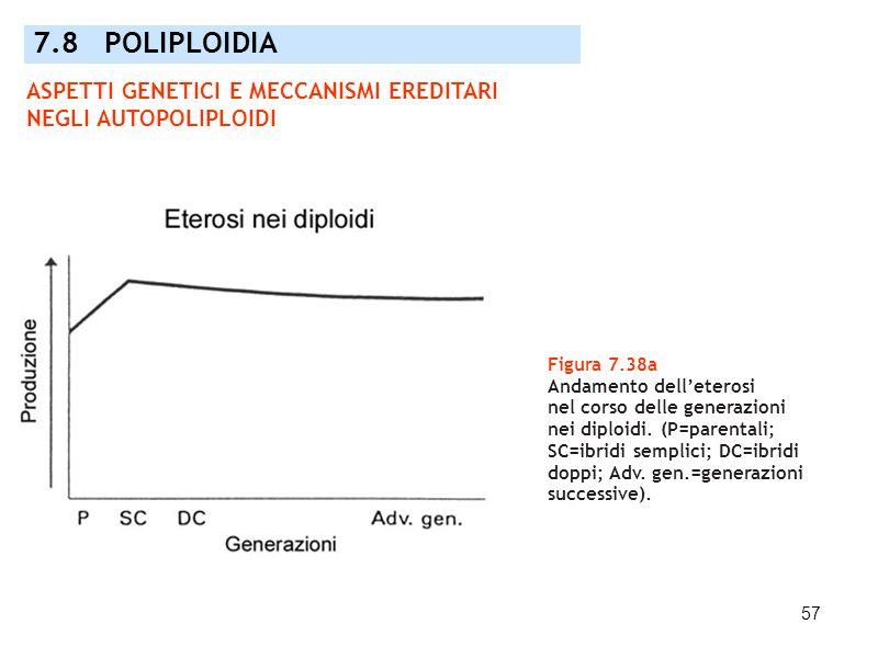 57 Figura 7.38a Andamento delleterosi nel corso delle generazioni nei diploidi. (P=parentali; SC=ibridi semplici; DC=ibridi doppi; Adv. gen.=generazio