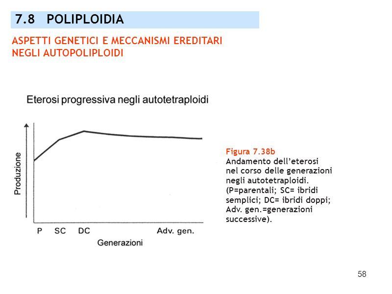 58 Figura 7.38b Andamento delleterosi nel corso delle generazioni negli autotetraploidi. (P=parentali; SC= ibridi semplici; DC= ibridi doppi; Adv. gen