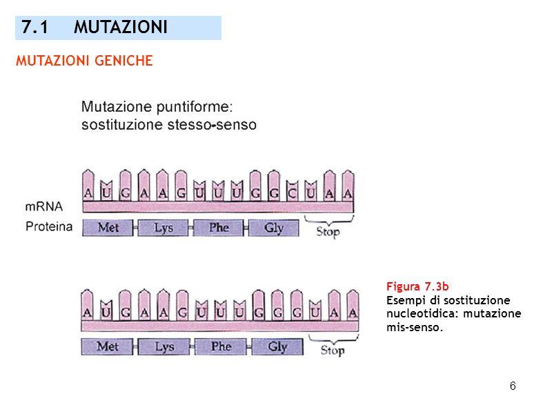 6 Figura 7.3b Esempi di sostituzione nucleotidica: mutazione mis-senso. 7.1 MUTAZIONI MUTAZIONI GENICHE