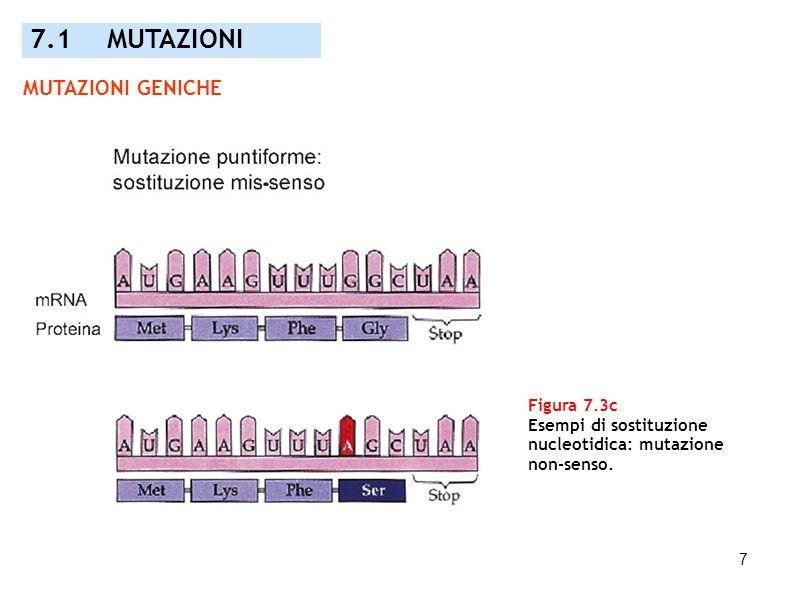 7 Figura 7.3c Esempi di sostituzione nucleotidica: mutazione non-senso. 7.1 MUTAZIONI MUTAZIONI GENICHE