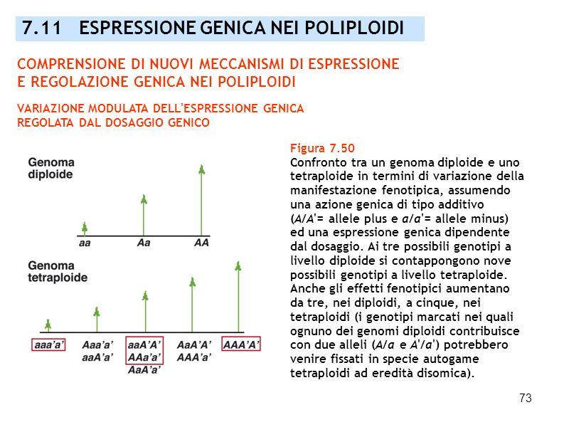 73 Figura 7.50 Confronto tra un genoma diploide e uno tetraploide in termini di variazione della manifestazione fenotipica, assumendo una azione genic