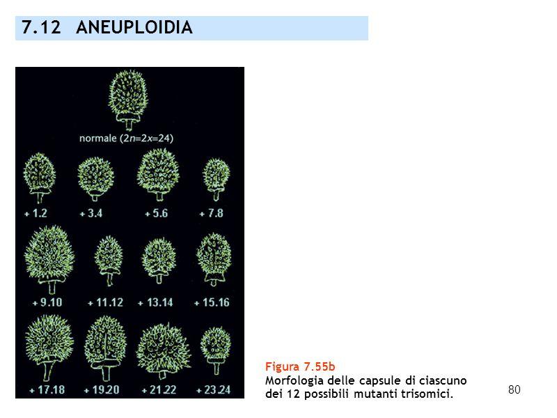 80 7.12 ANEUPLOIDIA Figura 7.55b Morfologia delle capsule di ciascuno dei 12 possibili mutanti trisomici.