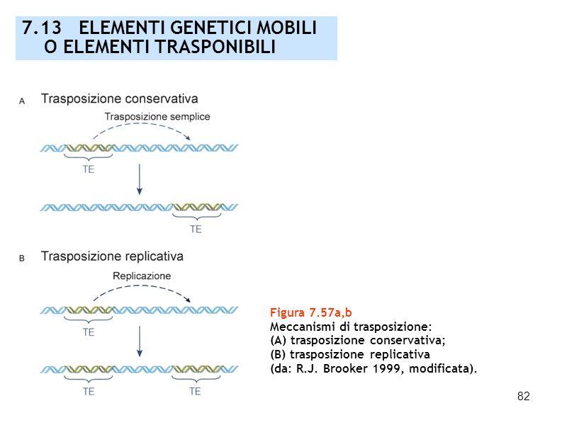 82 Figura 7.57a,b Meccanismi di trasposizione: (A) trasposizione conservativa; (B) trasposizione replicativa (da: R.J. Brooker 1999, modificata). 7.13