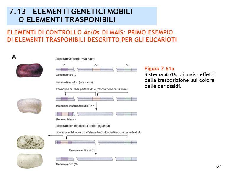 87 Figura 7.61a Sistema Ac/Ds di mais: effetti della trasposizione sul colore delle cariossidi. 7.13 ELEMENTI GENETICI MOBILI O ELEMENTI TRASPONIBILI