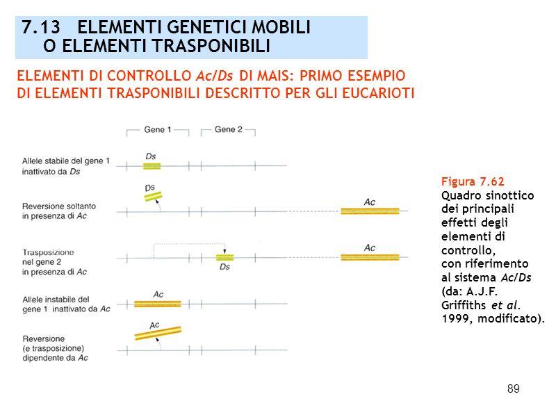 90 Figura 7.63 Rilevazione di una rottura (fonte di instabilità) cromosomica dovuta all azione dell elemento Ds in mais mediante analisi cariologica e genetica (da: A.J.F.