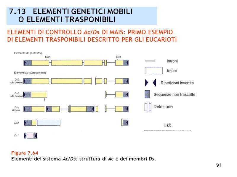 91 Figura 7.64 Elementi del sistema Ac/Ds: struttura di Ac e dei membri Ds. 7.13 ELEMENTI GENETICI MOBILI O ELEMENTI TRASPONIBILI ELEMENTI DI CONTROLL