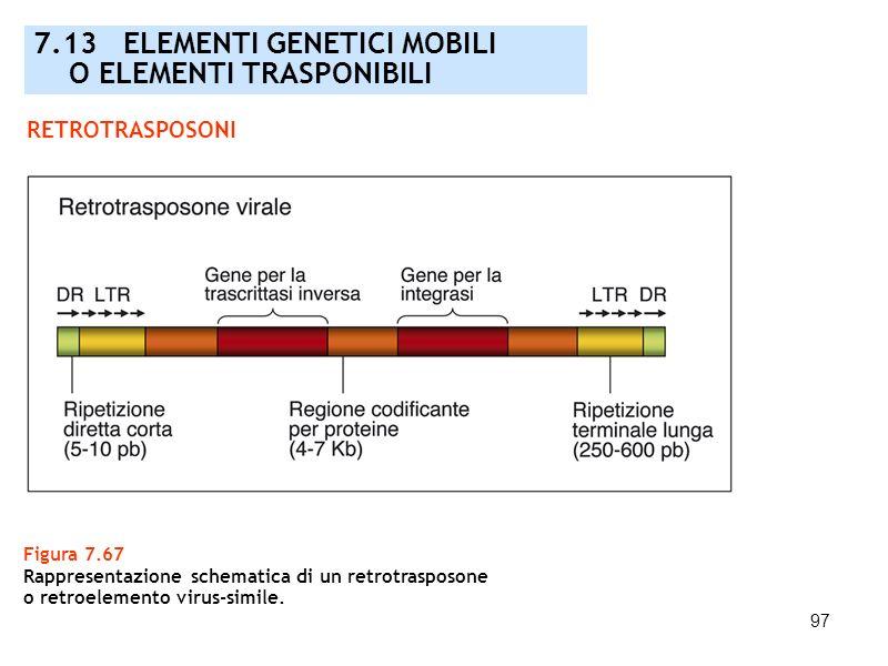 97 Figura 7.67 Rappresentazione schematica di un retrotrasposone o retroelemento virus-simile. 7.13 ELEMENTI GENETICI MOBILI O ELEMENTI TRASPONIBILI R