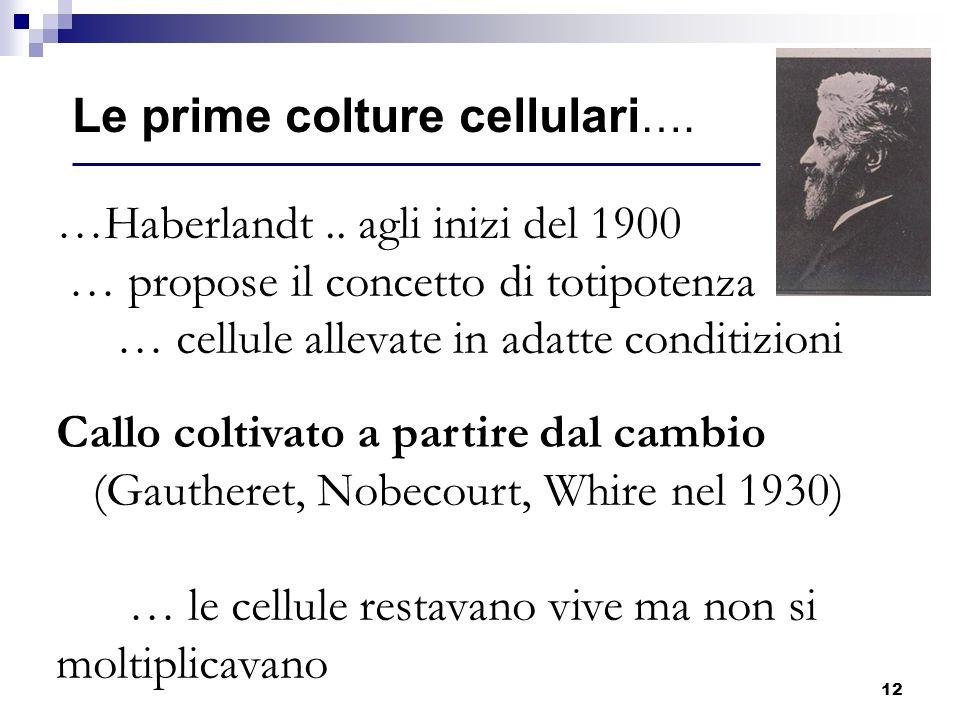 12 …Haberlandt.. agli inizi del 1900 … propose il concetto di totipotenza … cellule allevate in adatte conditizioni Callo coltivato a partire dal camb