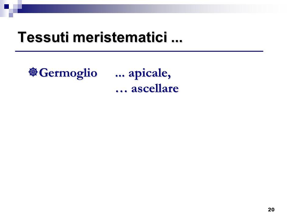 20 ]Germoglio... apicale, … ascellare Tessuti meristematici...