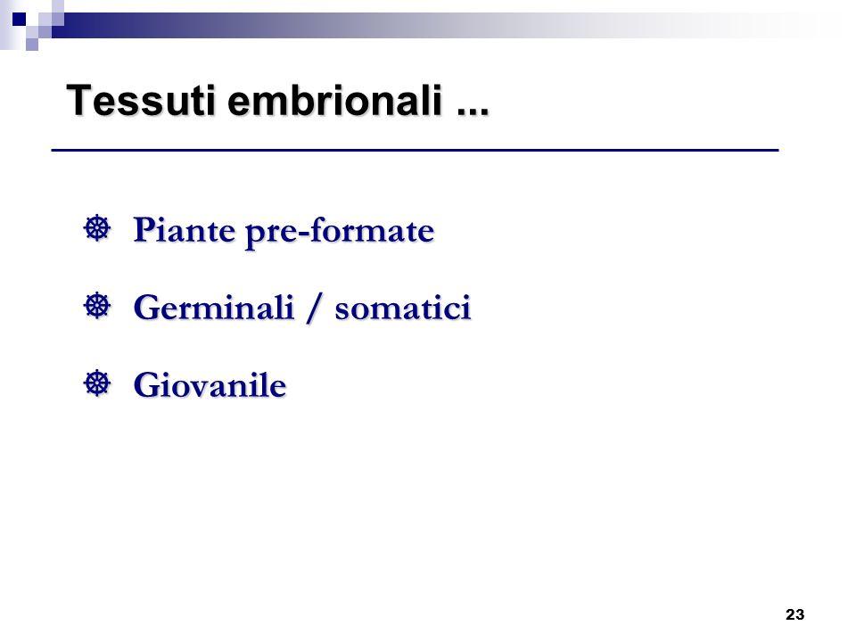 23 Tessuti embrionali... ] Piante pre-formate ] Germinali / somatici ] Giovanile