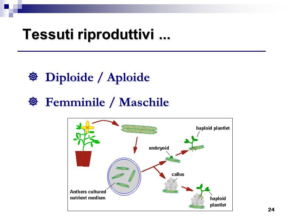 24 Tessuti riproduttivi... ] Diploide / Aploide ] Femminile / Maschile