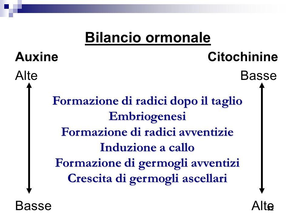 32 Bilancio ormonale Auxine Citochinine Alte Basse Basse Alte Formazione di radici dopo il taglio Formazione di radici dopo il taglio Embriogenesi Emb