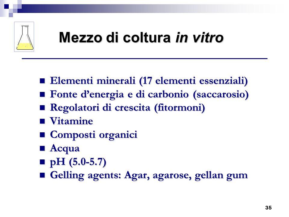 35 Elementi minerali (17 elementi essenziali) Elementi minerali (17 elementi essenziali) Fonte denergia e di carbonio (saccarosio) Fonte denergia e di