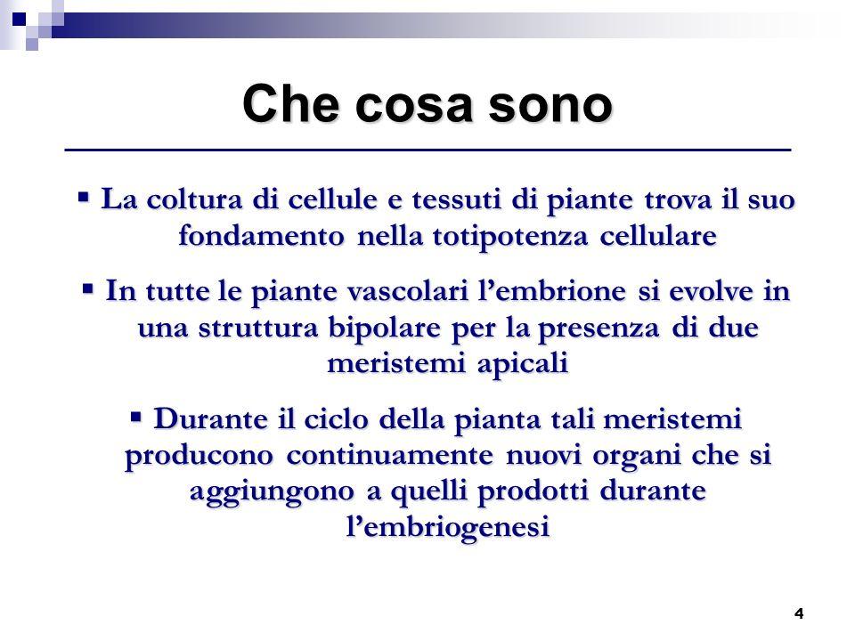 4 La coltura di cellule e tessuti di piante trova il suo fondamento nella totipotenza cellulare La coltura di cellule e tessuti di piante trova il suo