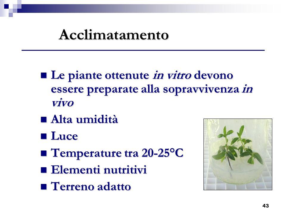 43 Acclimatamento Le piante ottenute in vitro devono essere preparate alla sopravvivenza in vivo Le piante ottenute in vitro devono essere preparate a