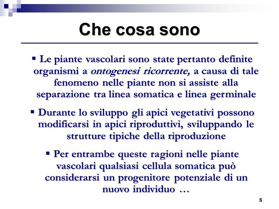 5 Le piante vascolari sono state pertanto definite organismi a ontogenesi ricorrente, a causa di tale fenomeno nelle piante non si assiste alla separa