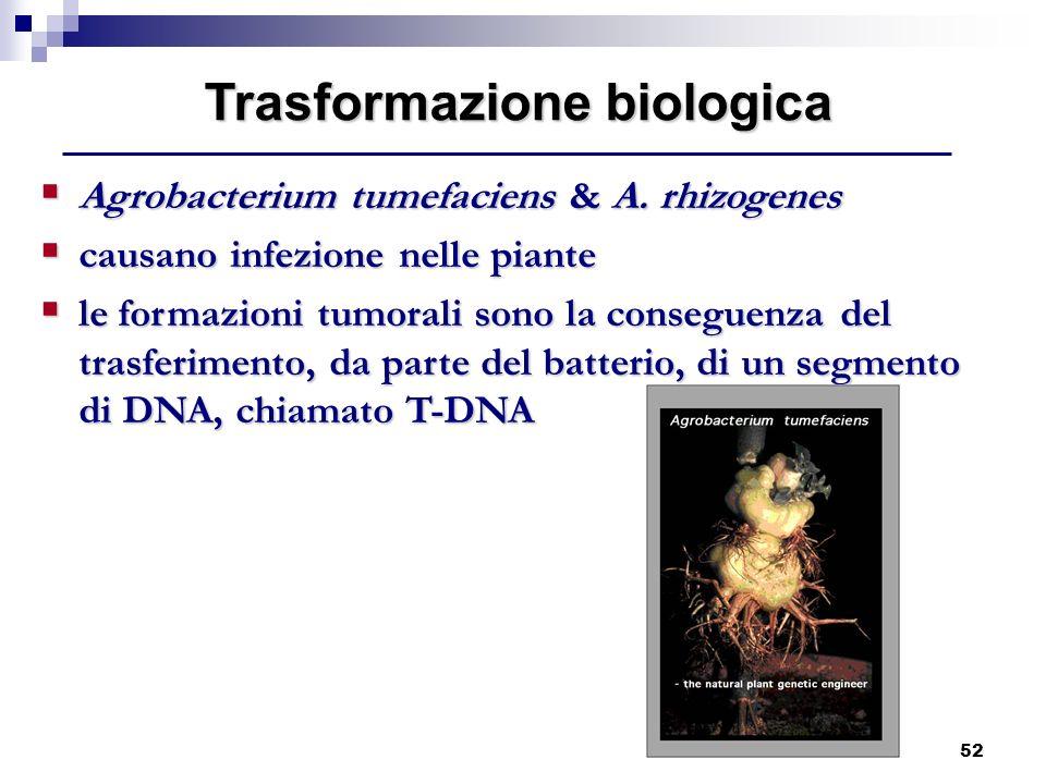 52 Trasformazione biologica Agrobacterium tumefaciens & A. rhizogenes Agrobacterium tumefaciens & A. rhizogenes causano infezione nelle piante causano