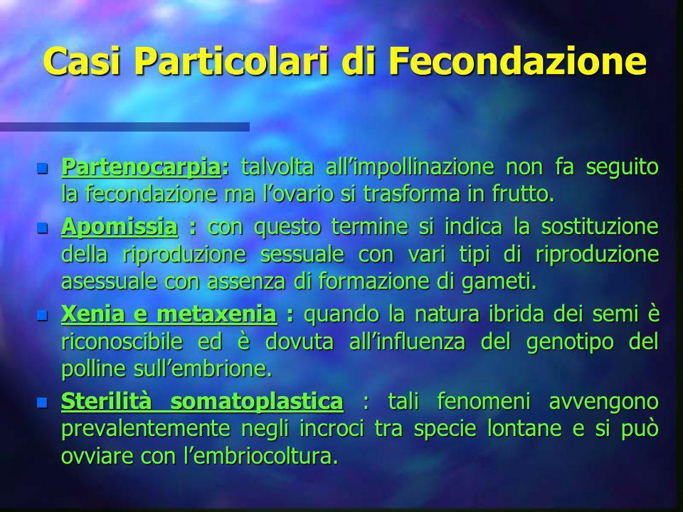 Casi Particolari di Fecondazione n Partenocarpia: talvolta allimpollinazione non fa seguito la fecondazione ma lovario si trasforma in frutto. n Apomi