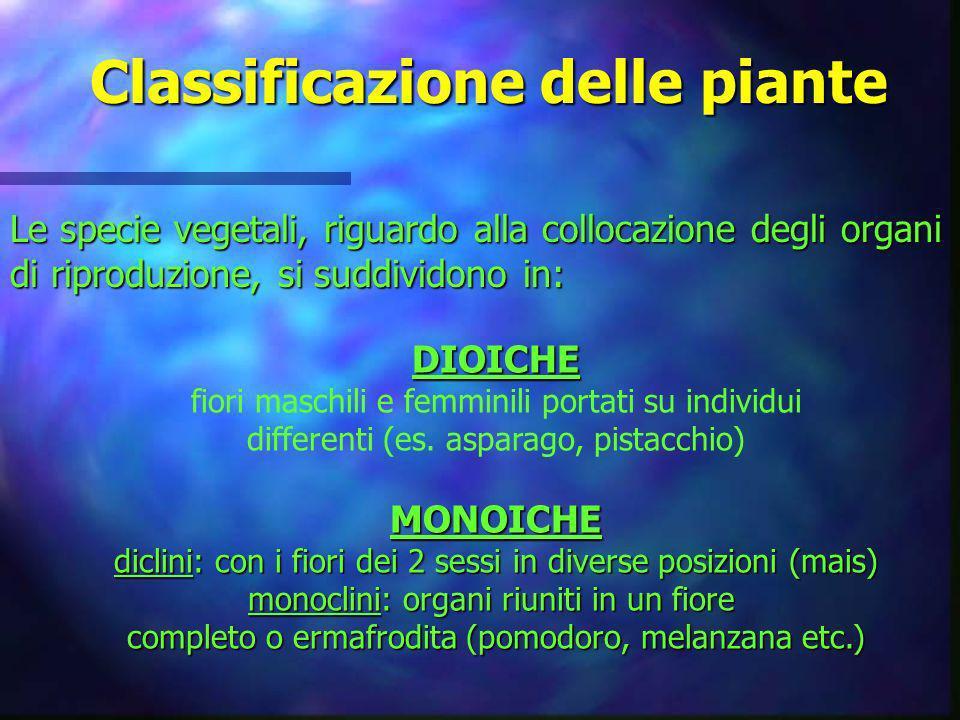 Classificazione delle piante Le specie vegetali, riguardo alla collocazione degli organi di riproduzione, si suddividono in: DIOICHE fiori maschili e
