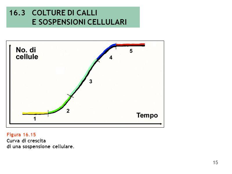 14 Figura 16.14 Fasi per lottenimento di colture cellulari in sospensione (modificata da: E.F. George, 1993). 16.3 COLTURE DI CALLI E SOSPENSIONI CELL