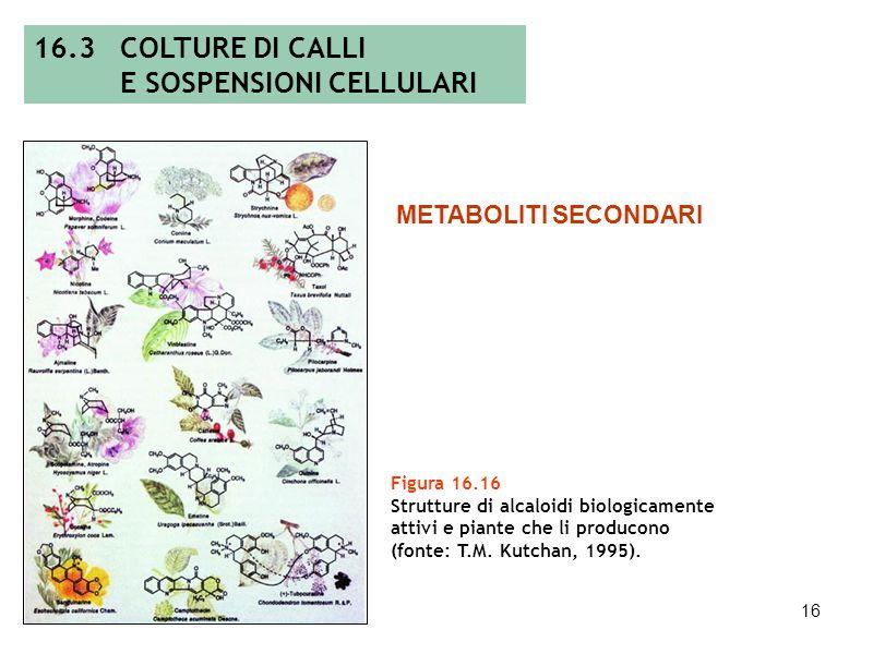 15 Figura 16.15 Curva di crescita di una sospensione cellulare. 16.3 COLTURE DI CALLI E SOSPENSIONI CELLULARI