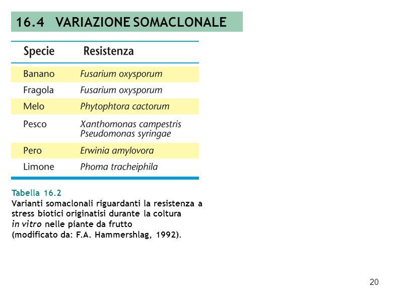 19 Figura 16.18 Livello di variabilità genetica nelle piante rigenerate in relazione al tipo di espianto. 16.4 VARIAZIONE SOMACLONALE