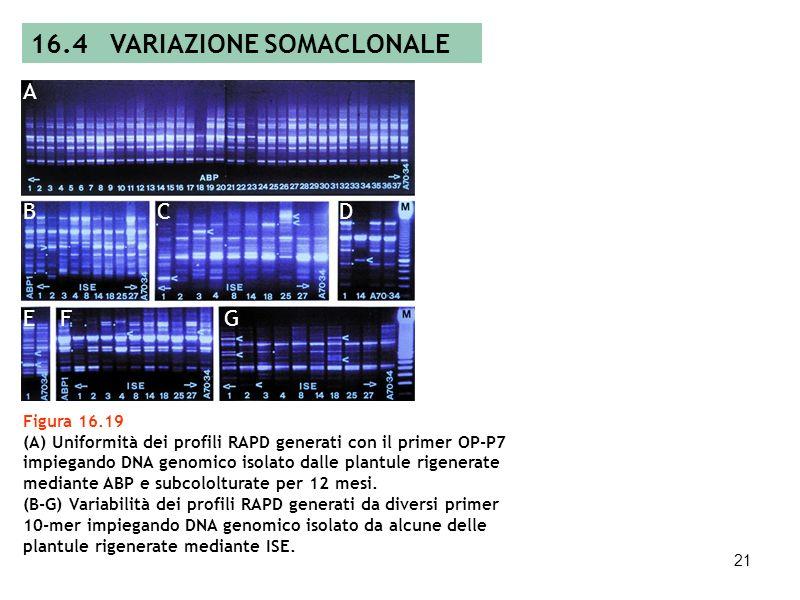 20 Tabella 16.2 Varianti somaclonali riguardanti la resistenza a stress biotici originatisi durante la coltura in vitro nelle piante da frutto (modifi