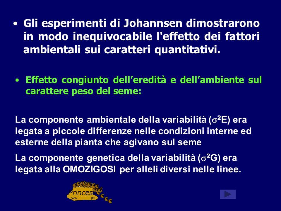 Gli esperimenti di Johannsen dimostrarono in modo inequivocabile l'effetto dei fattori ambientali sui caratteri quantitativi. Effetto congiunto deller