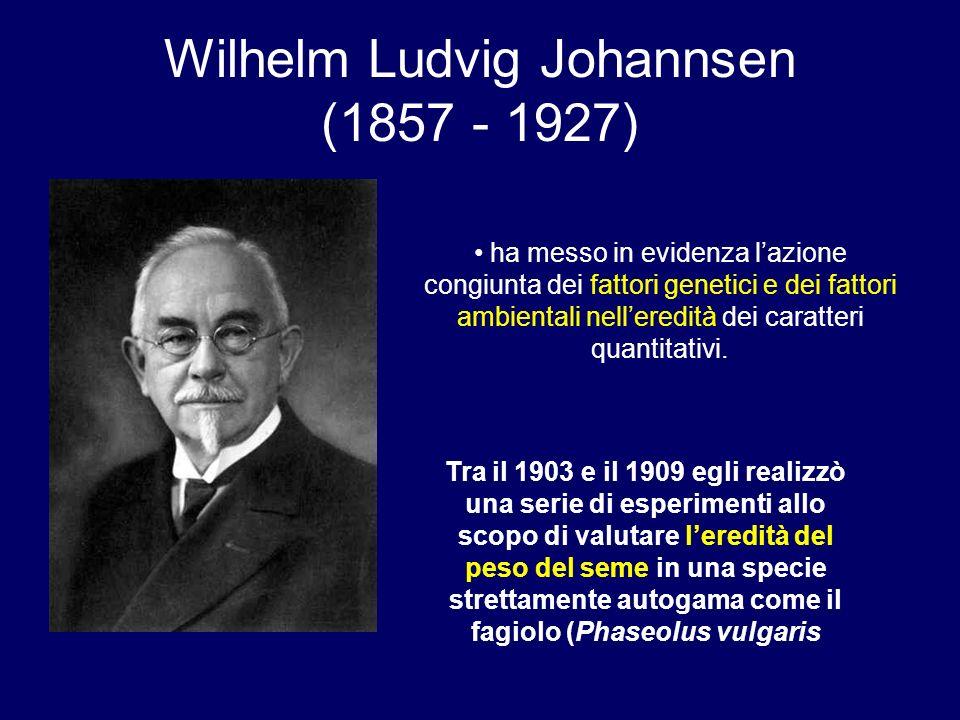 Wilhelm Ludvig Johannsen (1857 - 1927) ha messo in evidenza lazione congiunta dei fattori genetici e dei fattori ambientali nelleredità dei caratteri