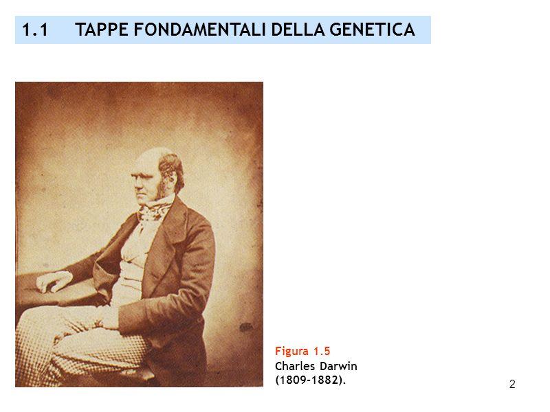 2 Figura 1.5 Charles Darwin (1809-1882). 1.1 TAPPE FONDAMENTALI DELLA GENETICA