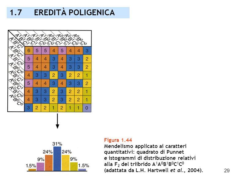 29 Figura 1.44 Mendelismo applicato ai caratteri quantitativi: quadrato di Punnet e istogrammi di distribuzione relativi alla F 2 del triibrido A 1 A